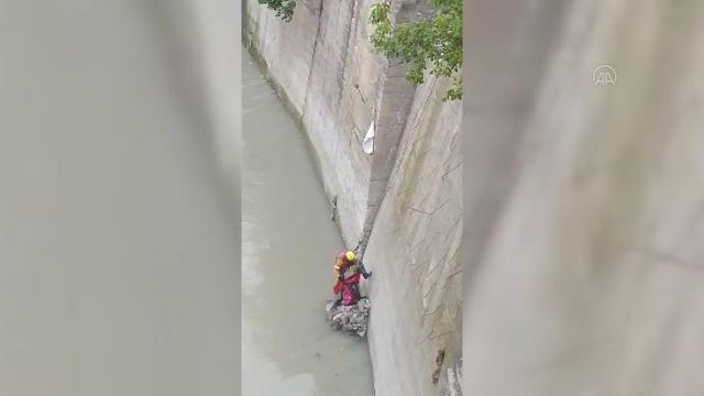 ARTVİN – Nehre düşen kedinin yardımına AFAD ekibi koştu