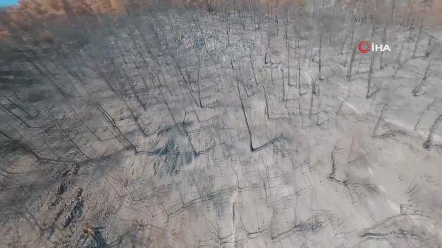 """'İklim değişikliği sürecinde orman yangınları"""" çalıştayı 2'nci gününde"""