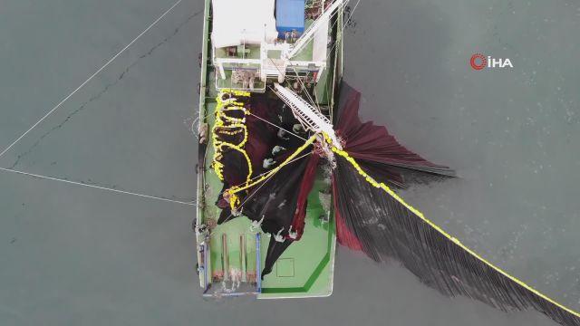 Körfeze giren 600 bin kilo hamsiyi saatler içinde yakaladılar